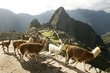 Noticia Machu Picchu